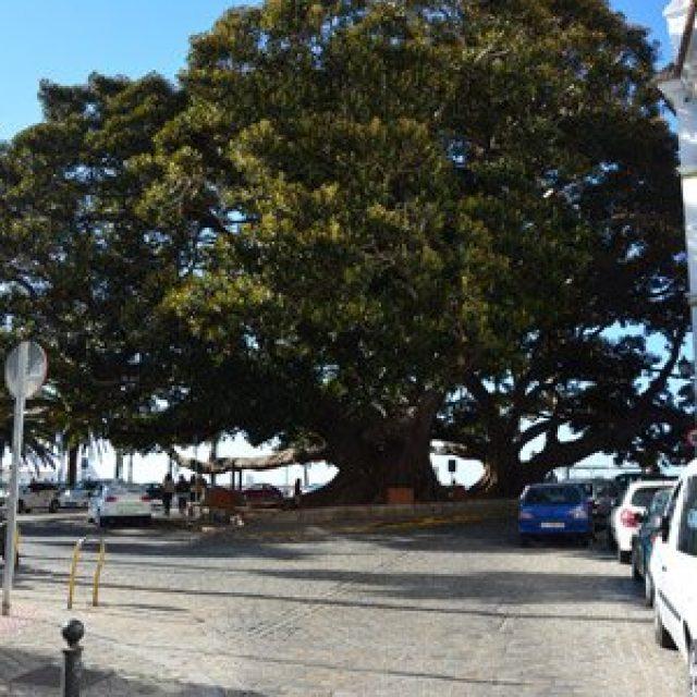 Columbus tree