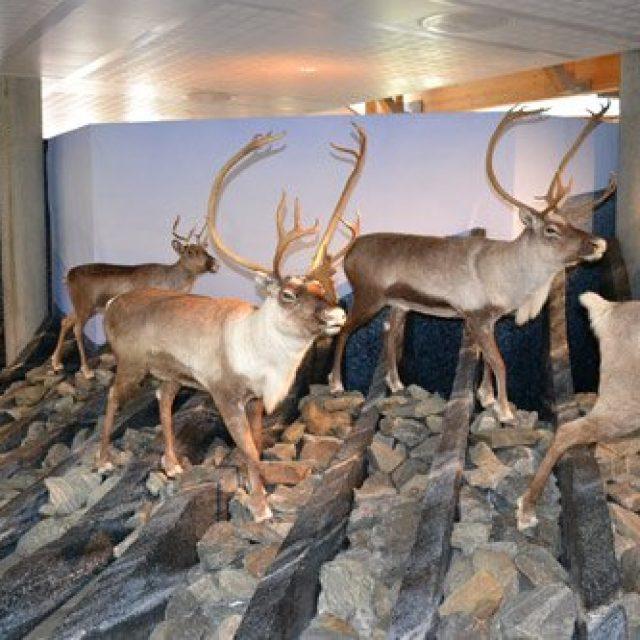 Hardangervidda nature and wildlife centre