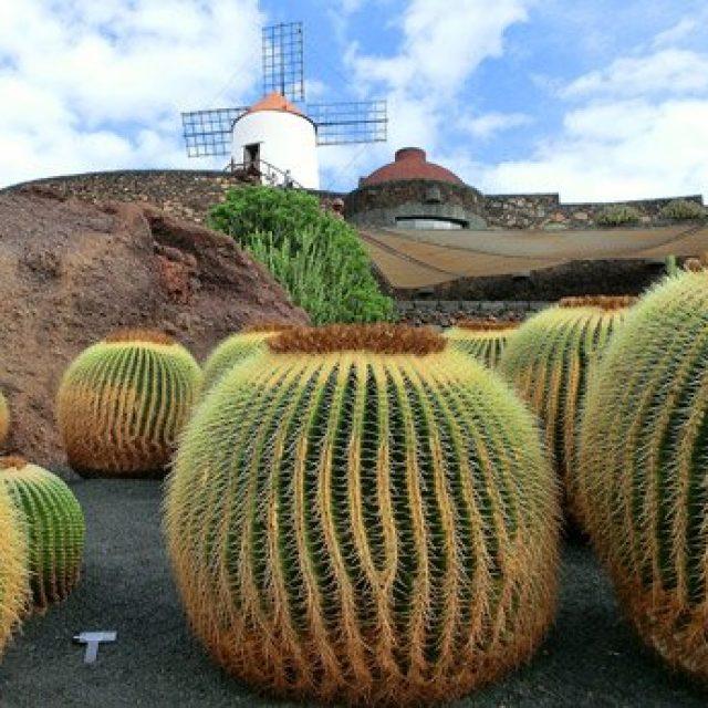 Cesar Manrique: Cactus garden