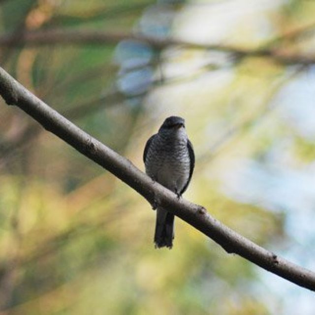 Dr Salim Ali Bird Sanctuary